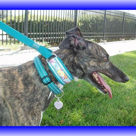 Martingale walking lead